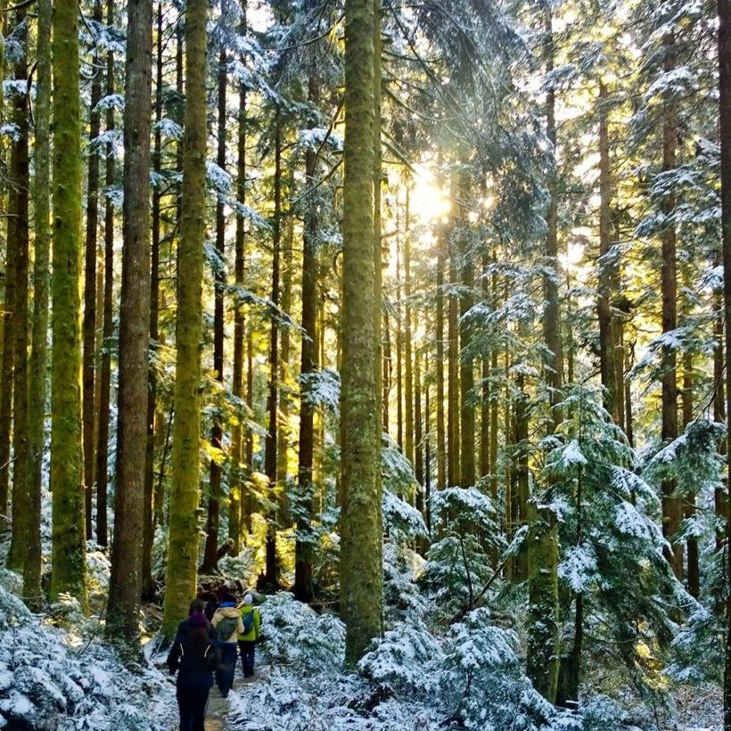 hikes near vancouver, best hikes near vancouver, best hikes in bc, amazing hikes in british columbia, top canadian hikes, hiking trails in lower mainland, epic hikes, outdoors, explore, pnw, lynn loop, north vancouver